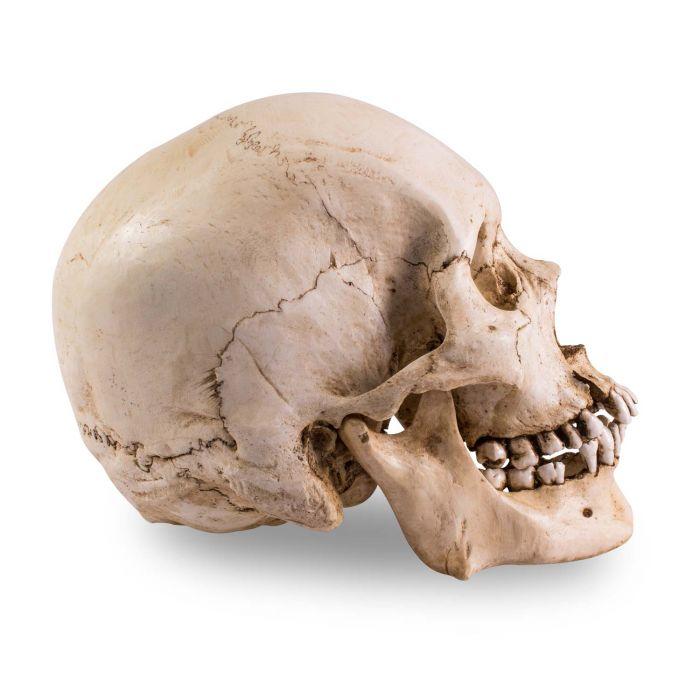 Skull Shoppe - Homem Adulto Asiático (Com Marcas de Instrumentos)