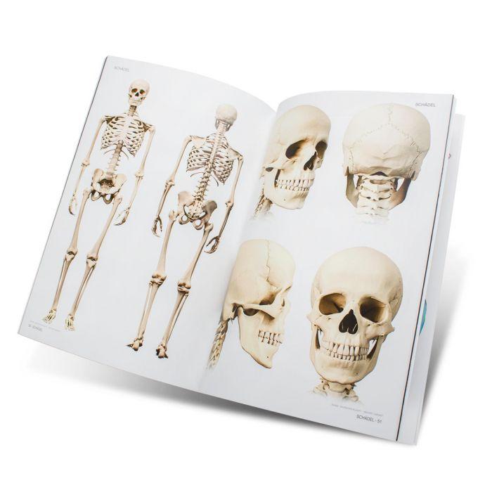 Skull & Bones - Modelos para Artistas