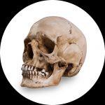 Reference Skulls pelo Skull Shoppe